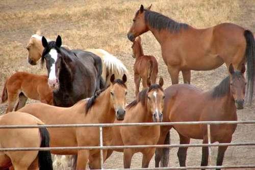 tour ponies